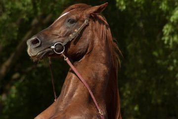 Hesteudstyr